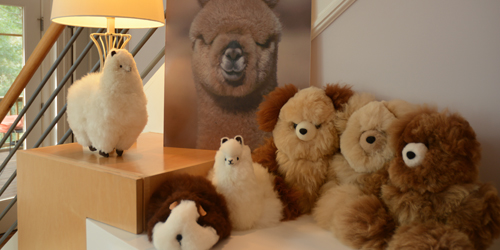 Teddy Bears and Stuffed Alpacas